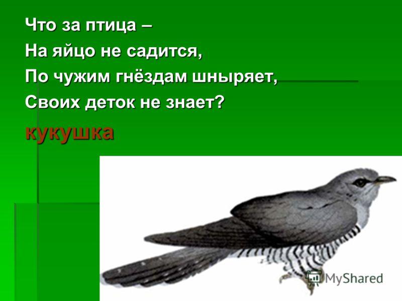 Что за птица – На яйцо не садится, По чужим гнёздам шныряет, Своих деток не знает? кукушка
