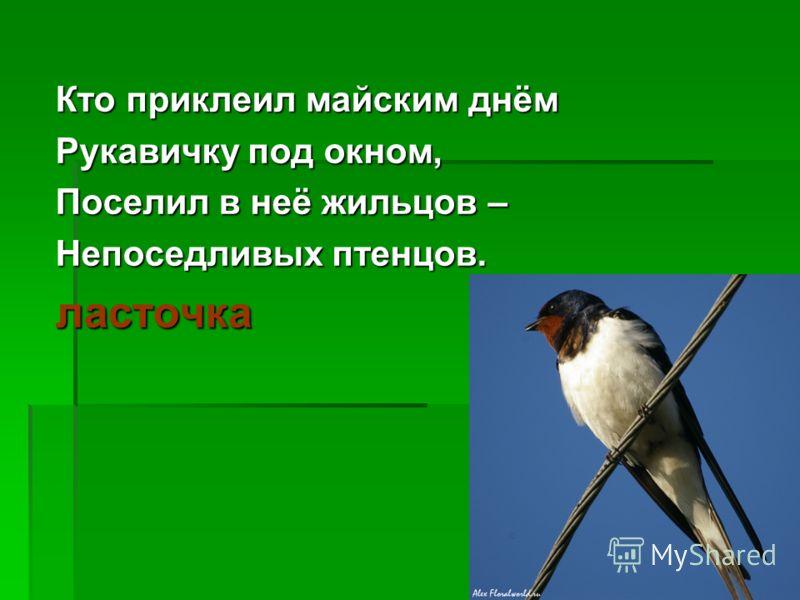 Кто приклеил майским днём Рукавичку под окном, Поселил в неё жильцов – Непоседливых птенцов. ласточка