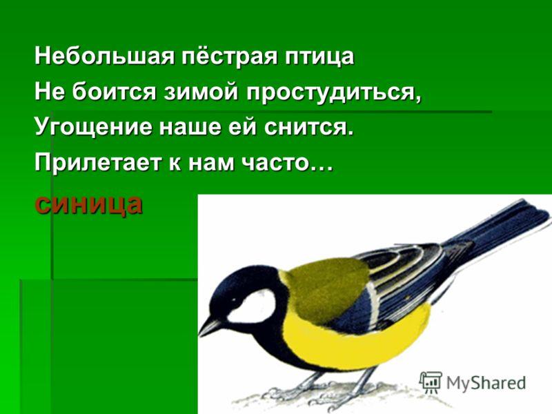 Небольшая пёстрая птица Не боится зимой простудиться, Угощение наше ей снится. Прилетает к нам часто… синица