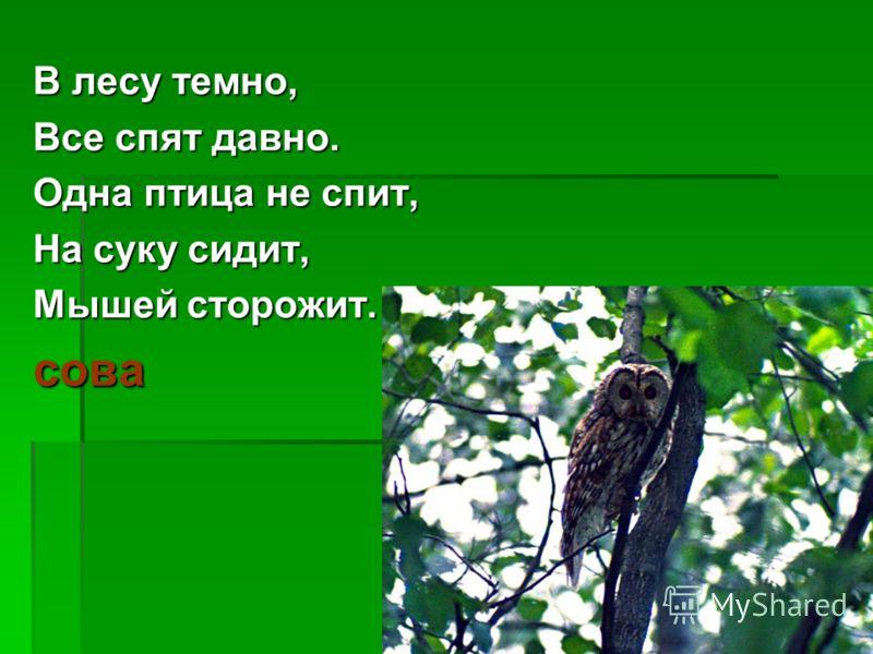 В лесу темно, Все спят давно. Одна птица не спит, На суку сидит, Мышей сторожит. сова