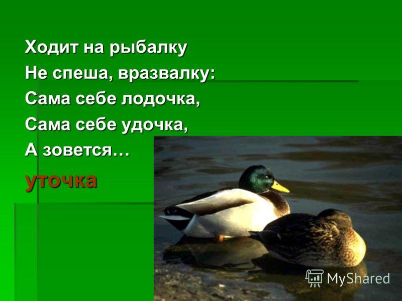 Ходит на рыбалку Не спеша, вразвалку: Сама себе лодочка, Сама себе удочка, А зовется… уточка