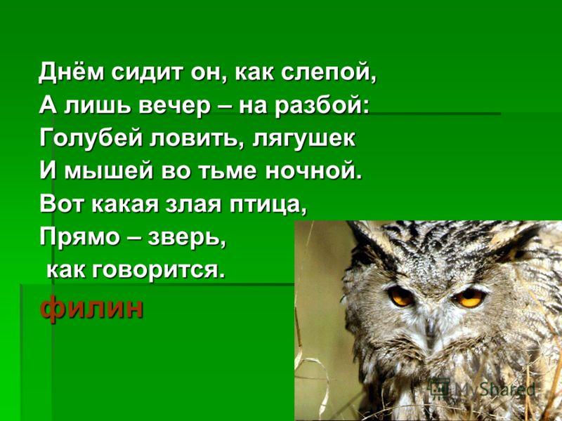 Днём сидит он, как слепой, А лишь вечер – на разбой: Голубей ловить, лягушек И мышей во тьме ночной. Вот какая злая птица, Прямо – зверь, как говорится. как говорится.филин