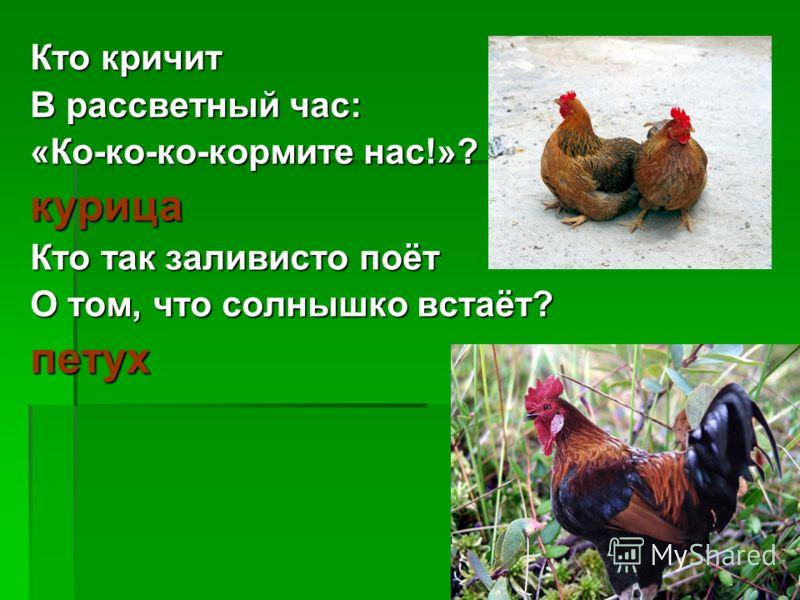 Кто кричит В рассветный час: «Ко-ко-ко-кормите нас!»? курица Кто так заливисто поёт О том, что солнышко встаёт? петух