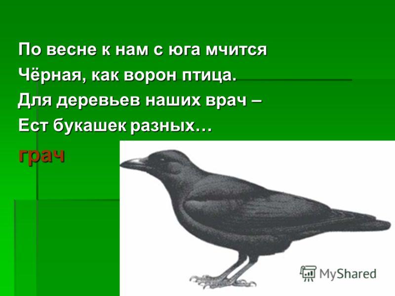 По весне к нам с юга мчится Чёрная, как ворон птица. Для деревьев наших врач – Ест букашек разных… грач