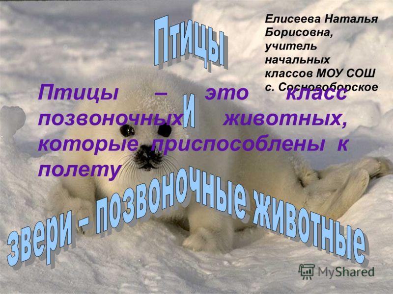 Елисеева Наталья Борисовна, учитель начальных классов МОУ СОШ с. Сосновоборское Птицы – это класс позвоночных животных, которые приспособлены к полету