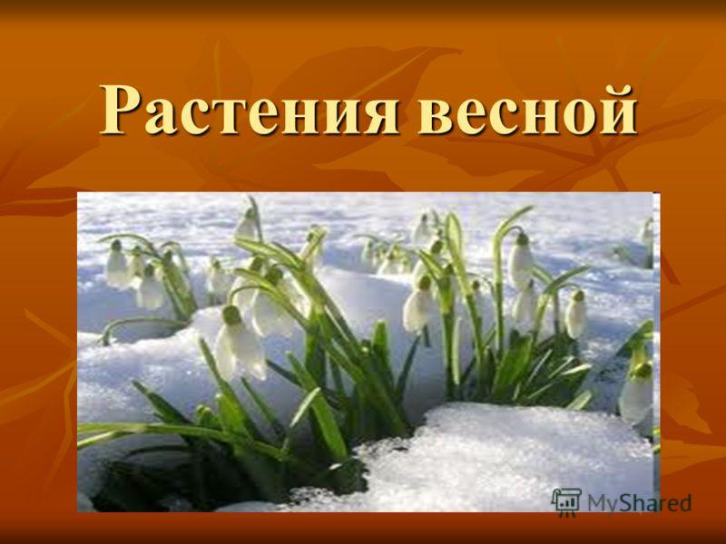 Растения весной