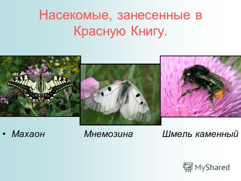 Животные Занесенные В Красную Книгу Мордовии