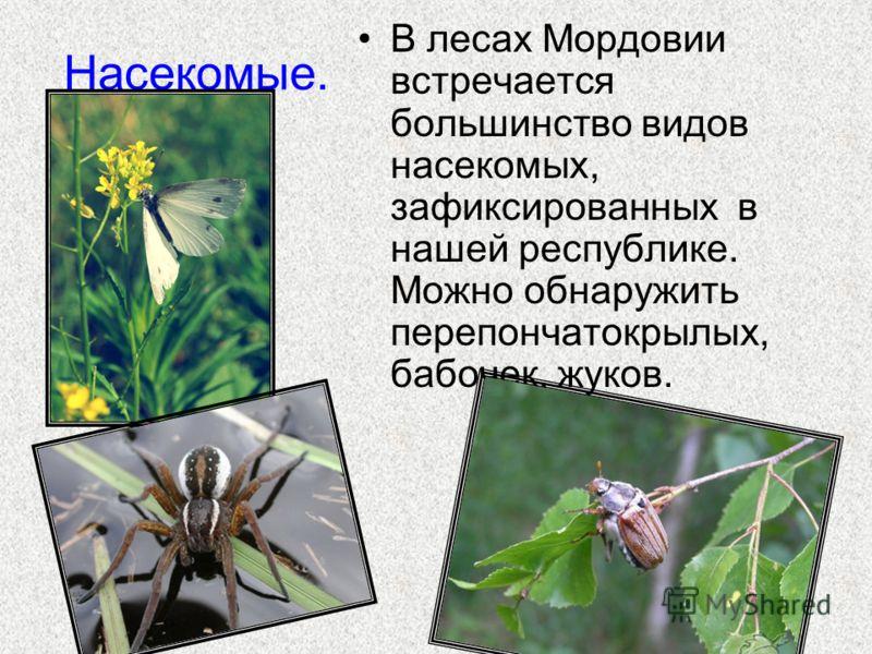 Насекомые. В лесах Мордовии встречается большинство видов насекомых, зафиксированных в нашей республике. Можно обнаружить перепончатокрылых, бабочек, жуков.