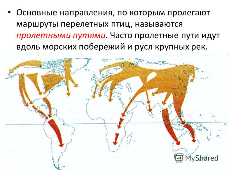 Основные направления, по которым пролегают маршруты перелетных птиц, называются пролетными путями. Часто пролетные пути идут вдоль морских побережий и русл крупных рек.