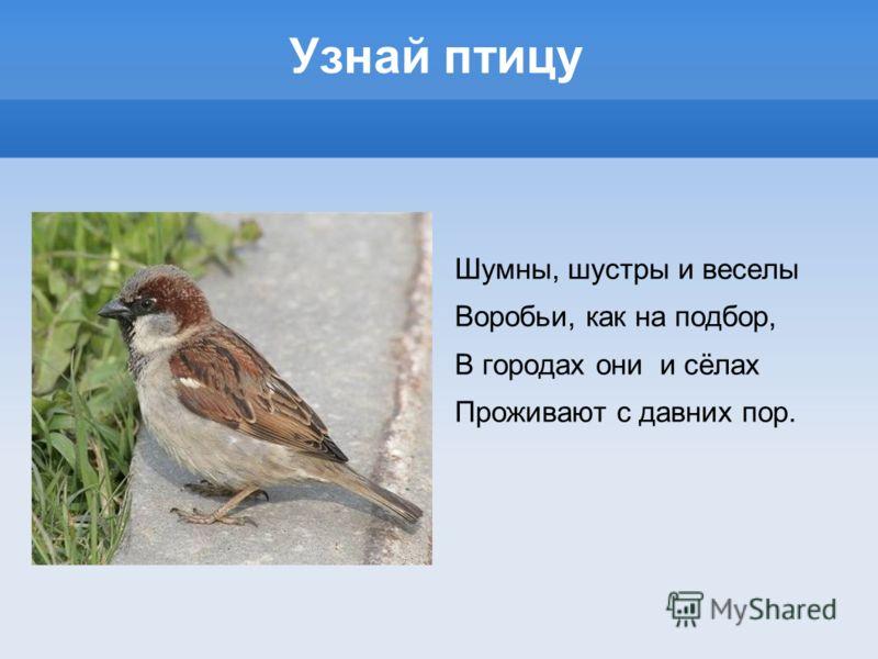 Узнай птицу Шумны, шустры и веселы Воробьи, как на подбор, В городах они и сёлах Проживают с давних пор.