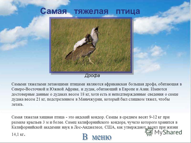 Самая тяжелая птица Самыми тяжелыми летающими птицами являются африканская большая дрофа, обитающая в Северо-Восточной и Южной Африке, и дудак, обитающий в Европе и Азии. Имеются достоверные данные о дудаках весом 18 кг, хотя есть и неподтвержденные