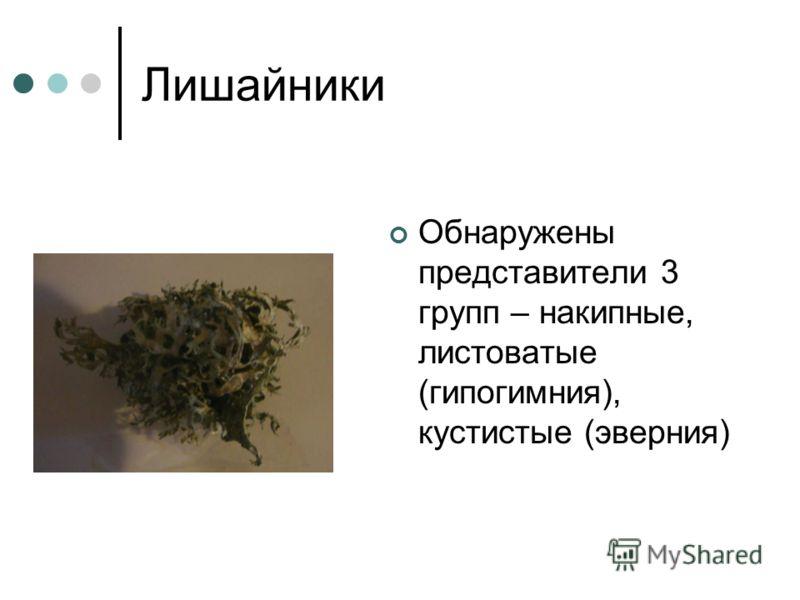 Лишайники Обнаружены представители 3 групп – накипные, листоватые (гипогимния), кустистые (эверния)