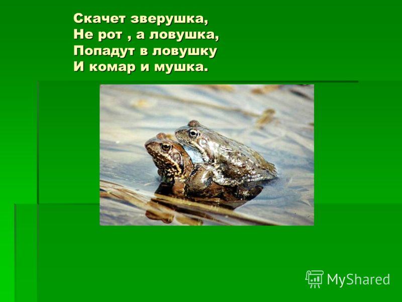 Скачет зверушка, Не рот, а ловушка, Попадут в ловушку И комар и мушка. Скачет зверушка, Не рот, а ловушка, Попадут в ловушку И комар и мушка.