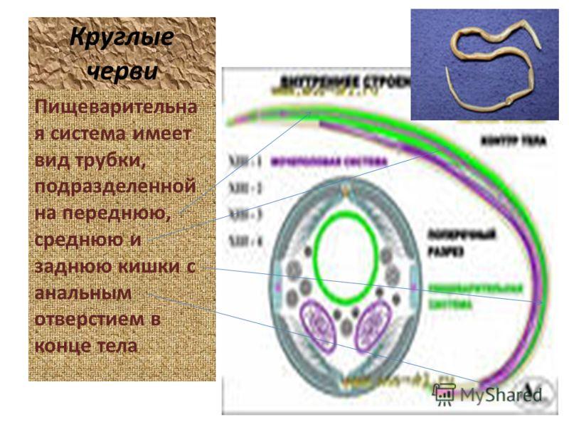 лечение от паразитов в красноярске