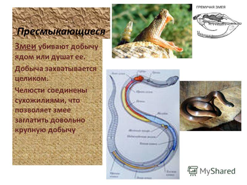 Пресмыкающиеся Змеи убивают добычу ядом или душат ее. Добыча захватывается целиком. Челюсти соединены сухожилиями, что позволяет змее заглатить довольно крупную добычу