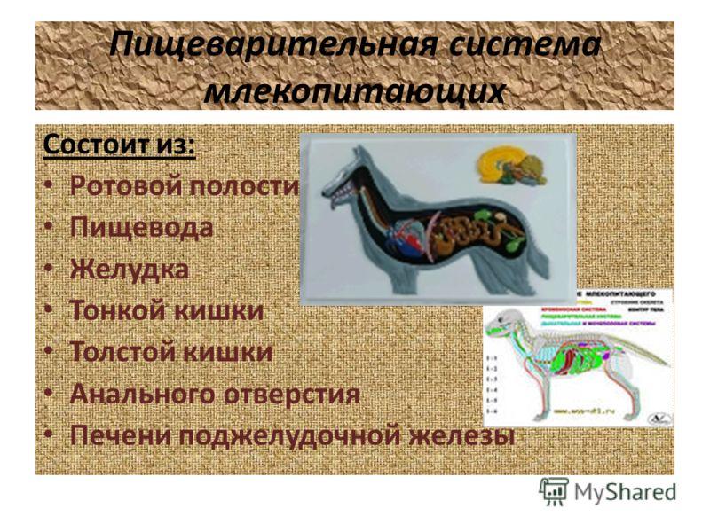 Пищеварительная система млекопитающих Состоит из: Ротовой полости Пищевода Желудка Тонкой кишки Толстой кишки Анального отверстия Печени поджелудочной железы