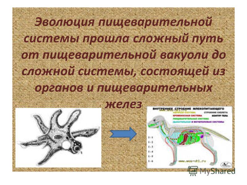 Эволюция пищеварительной системы прошла сложный путь от пищеварительной вакуоли до сложной системы, состоящей из органов и пищеварительных желез