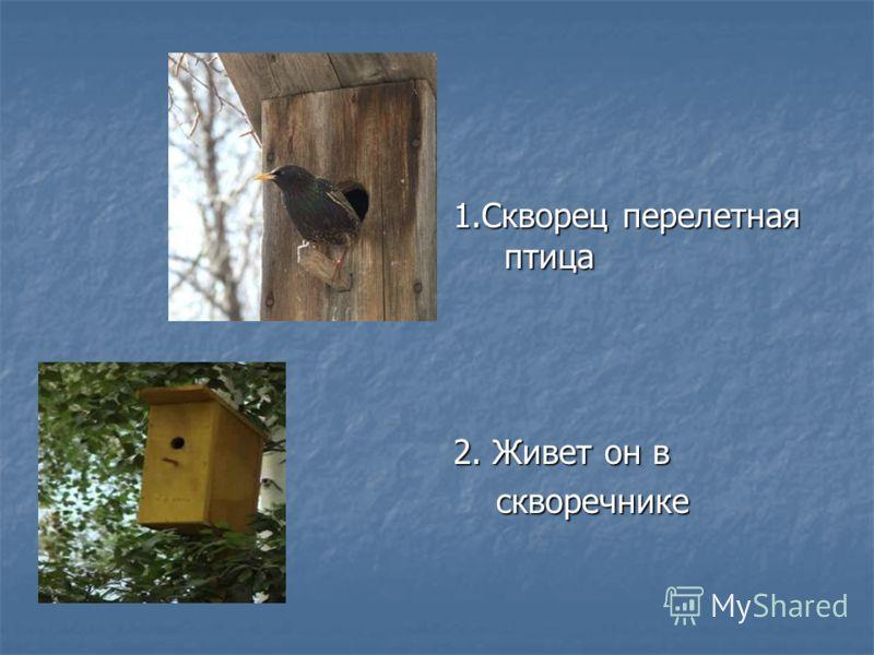 1.Скворец перелетная птица 2. Живет он в скворечнике скворечнике
