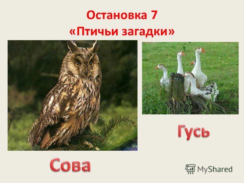 Остановка 7 «Птичьи загадки»