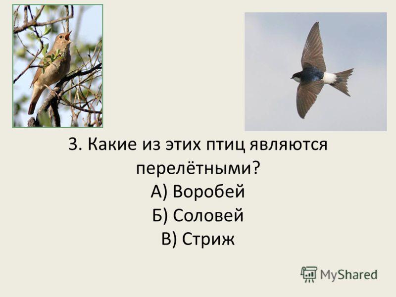 3. Какие из этих птиц являются перелётными? А) Воробей Б) Соловей В) Стриж