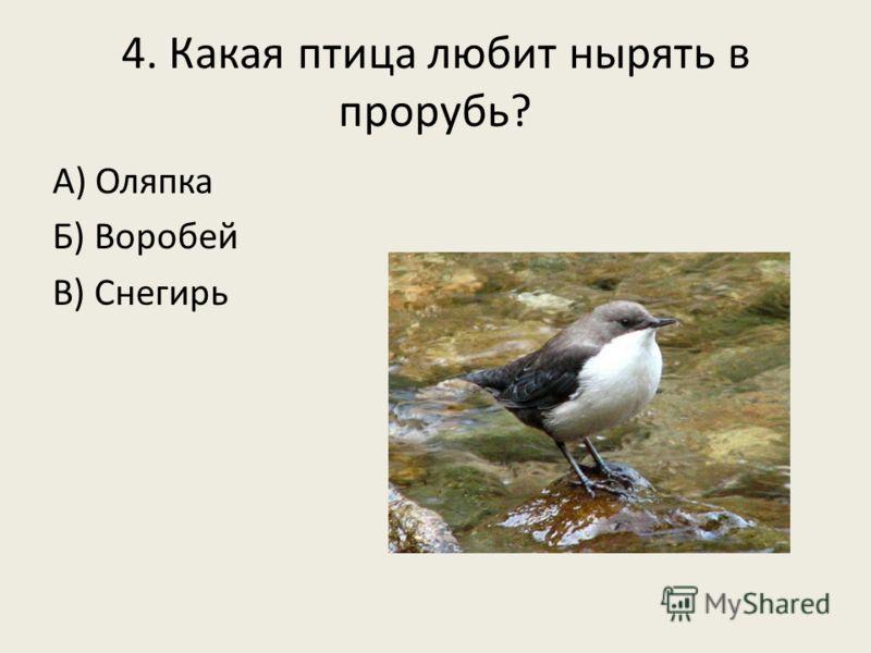 4. Какая птица любит нырять в прорубь? А) Оляпка Б) Воробей В) Снегирь