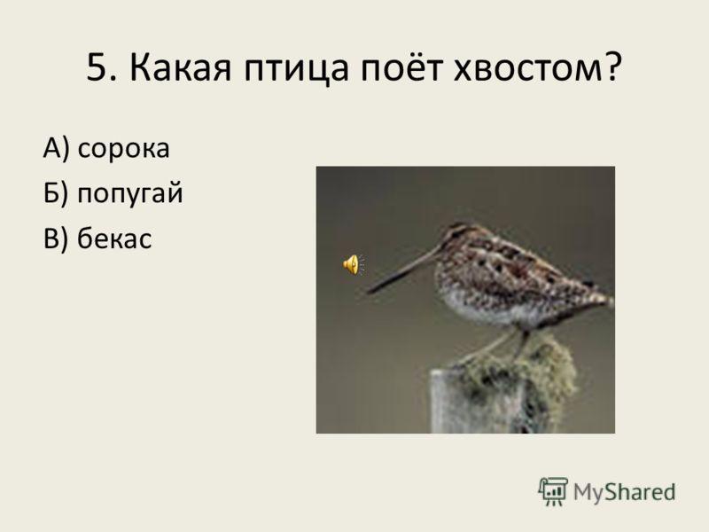 5. Какая птица поёт хвостом? А) сорока Б) попугай В) бекас