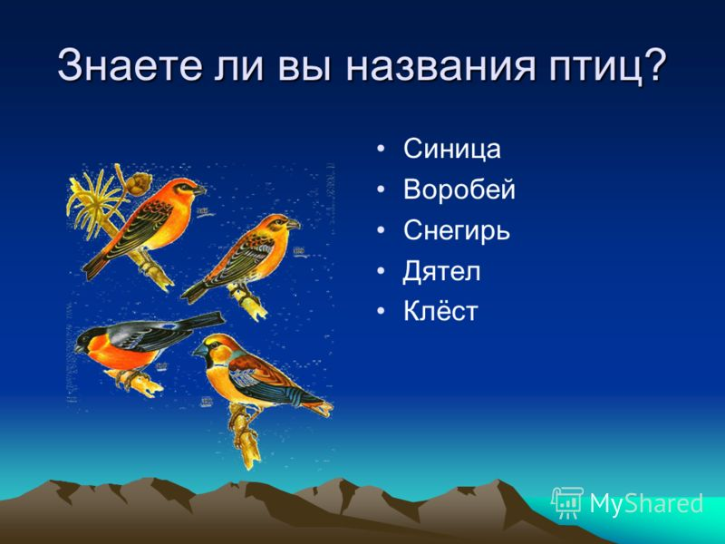 Знаете ли вы названия птиц? Синица Воробей Снегирь Дятел Клёст
