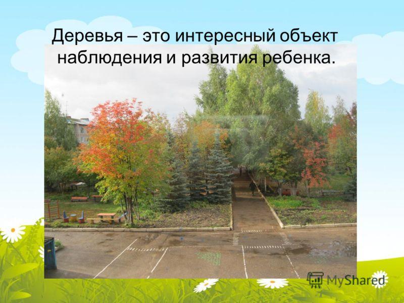 Деревья – это интересный объект наблюдения и развития ребенка.