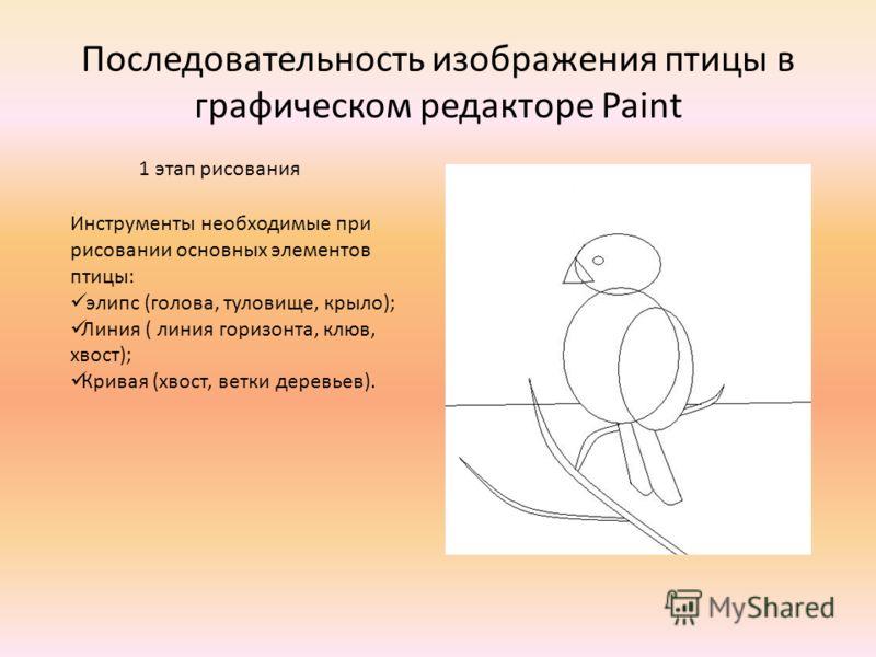 Последовательность изображения птицы в графическом редакторе Paint Инструменты необходимые при рисовании основных элементов птицы: элипс (голова, туловище, крыло); Линия ( линия горизонта, клюв, хвост); Кривая (хвост, ветки деревьев). 1 этап рисовани