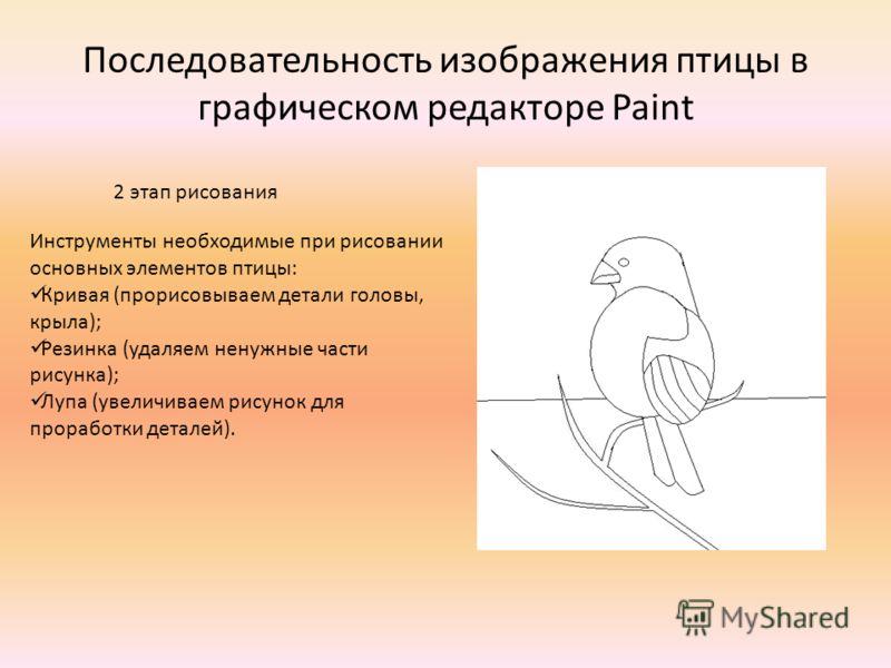 Последовательность изображения птицы в графическом редакторе Paint Инструменты необходимые при рисовании основных элементов птицы: Кривая (прорисовываем детали головы, крыла); Резинка (удаляем ненужные части рисунка); Лупа (увеличиваем рисунок для пр