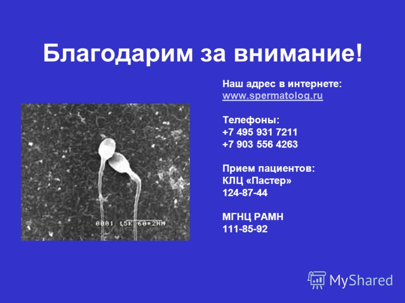 Благодарим за внимание! Наш адрес в интернете: www.spermatolog.ru Телефоны: +7 495 931 7211 +7 903 556 4263 Прием пациентов: КЛЦ «Пастер» 124-87-44 МГНЦ РАМН 111-85-92