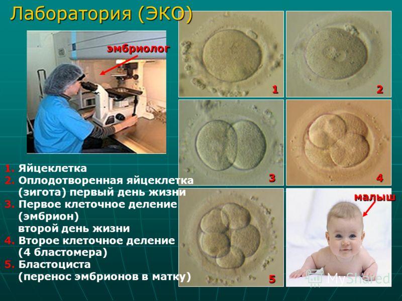 Лаборатория (ЭКО) Лаборатория (ЭКО)12 34 5 1. Яйцеклетка 2. Оплодотворенная яйцеклетка (зигота) первый день жизни 3. Первое клеточное деление (эмбрион) второй день жизни 4. Второе клеточное деление (4 бластомера) 5. Бластоциста (перенос эмбрионов в м