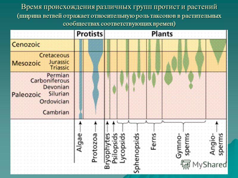 Время происхождения различных групп протист и растений (ширина ветвей отражает относительную роль таксонов в растительных сообществах соответствующих времен)