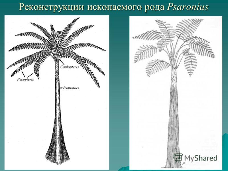 Реконструкции ископаемого рода Psaronius