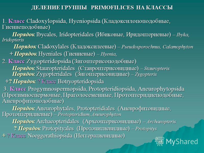 ДЕЛЕНИЕ ГРУППЫ PRIMOFILICES НА КЛАССЫ 1. Класс Cladoxylopsida, Hyeniopsida (Кладоксилопоподобные, Гиениеподобные) Порядок Ibycales, Iridopteridales (Ибиковые, Иридоптериевые) – Ibyka, Iridopteris Порядок Cladoxylales (Кладоксилеевые) – Pseudosporochn