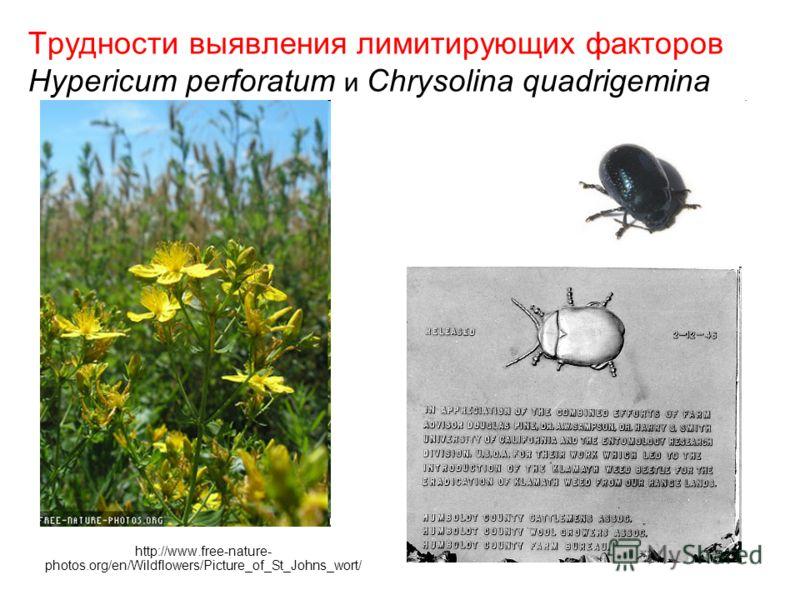 Трудности выявления лимитирующих факторов Hypericum perforatum и Chrysolina quadrigemina http://www.free-nature- photos.org/en/Wildflowers/Picture_of_St_Johns_wort/