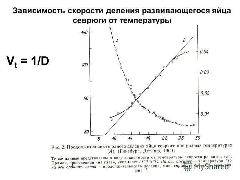 Зависимость скорости деления развивающегося яйца севрюги от температуры V t = 1/D