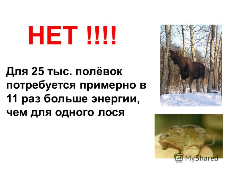 НЕТ !!!! Для 25 тыс. полёвок потребуется примерно в 11 раз больше энергии, чем для одного лося