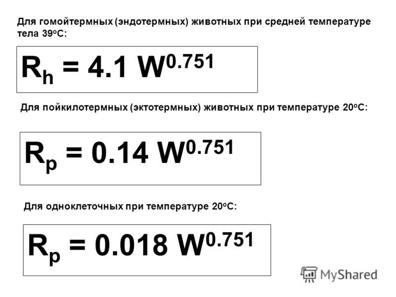 Для гомойтермных (эндотермных) животных при средней температуре тела 39 о С: R h = 4.1 W 0.751 Для пойкилотермных (эктотермных) животных при температуре 20 о С: R p = 0.14 W 0.751 Для одноклеточных при температуре 20 о С: R p = 0.018 W 0.751