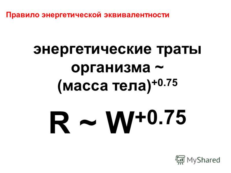 Правило энергетической эквивалентности энергетические траты организма ~ (масса тела) +0.75 R ~ W +0.75