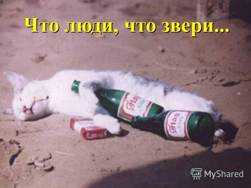 Спирт Метиловый фото