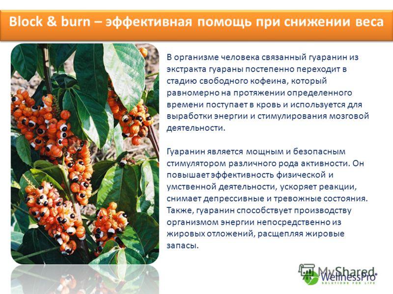Block & burn – эффективная помощь при снижении веса В организме человека связанный гуаранин из экстракта гуараны постепенно переходит в стадию свободного кофеина, который равномерно на протяжении определенного времени поступает в кровь и используется