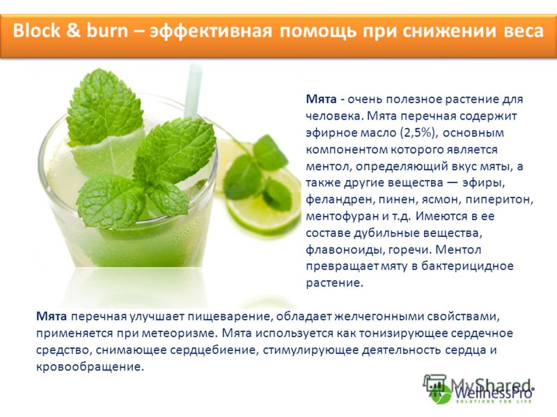 Block & burn – эффективная помощь при снижении веса Мята - очень полезное растение для человека. Мята перечная содержит эфирное масло (2,5%), основным компонентом которого является ментол, определяющий вкус мяты, а также другие вещества эфиры, феланд