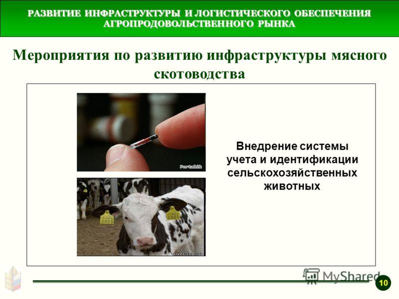 РАЗВИТИЕ ИНФРАСТРУКТУРЫ И ЛОГИСТИЧЕСКОГО ОБЕСПЕЧЕНИЯ АГРОПРОДОВОЛЬСТВЕННОГО РЫНКА Мероприятия по развитию инфраструктуры мясного скотоводства Внедрение системы учета и идентификации сельскохозяйственных животных 10