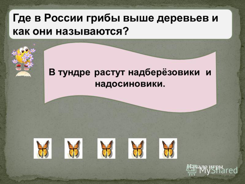 Какое животное не обитает в России? Бурый медведь, тигр, лев, овцебык, лось. Лев Начало игры