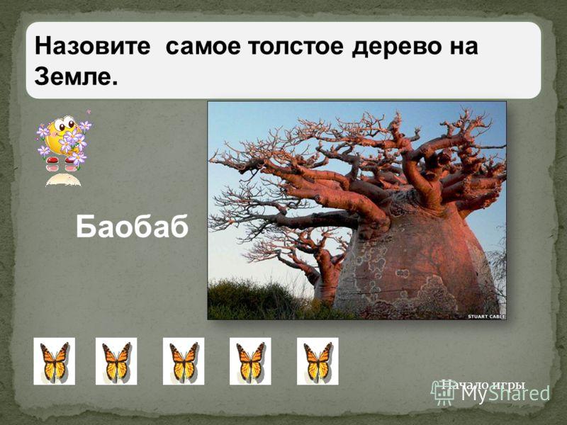 В сибирской тайге растёт удивительное дерево- лиственница. Но на ветках у неё не листья, а хвоя. Почему же дерево назвали лиственницей? Как лиственные деревья сбрасывает осенью хвою. Начало игры