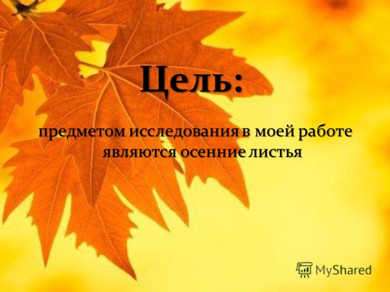 Цель: предметом исследования в моей работе являются осенние листья