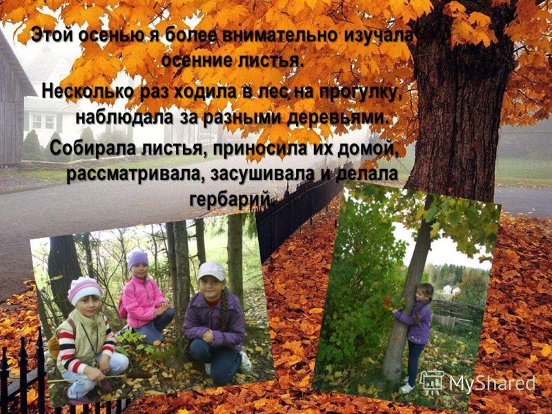 Этой осенью я более внимательно изучала осенние листья. Несколько раз ходила в лес на прогулку, наблюдала за разными деревьями. Собирала листья, приносила их домой, рассматривала, засушивала и делала гербарий. Собирала листья, приносила их домой, рас