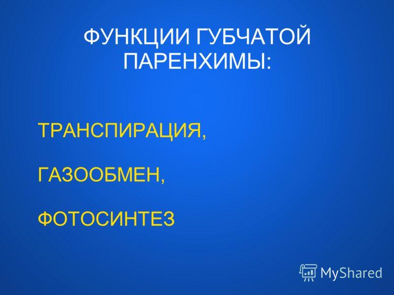 ФУНКЦИИ ГУБЧАТОЙ ПАРЕНХИМЫ: ТРАНСПИРАЦИЯ, ГАЗООБМЕН, ФОТОСИНТЕЗ