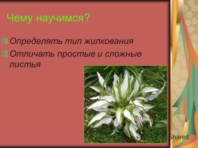 Что мы узнаем? Отличия простых и сложных листьев Типы жилкования листьев Особенности необычных листьев